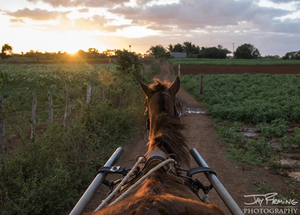 Riding a 'coche de caballo' to Diego Barrio's farm to photograph the tobacco harvest. Puerto Esperanza