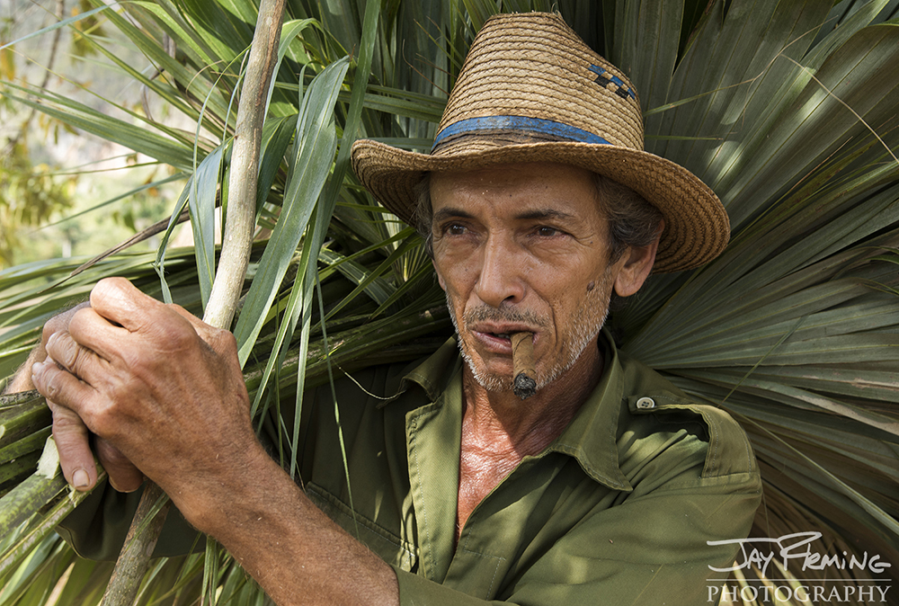 A Vinales farmer carries palm leaves used to line his tobacco barn.