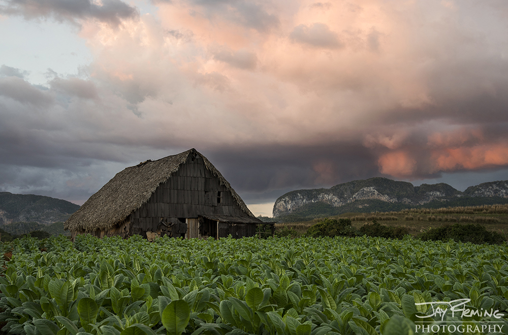 Tobacco plantation outside of Vinales at dusk.