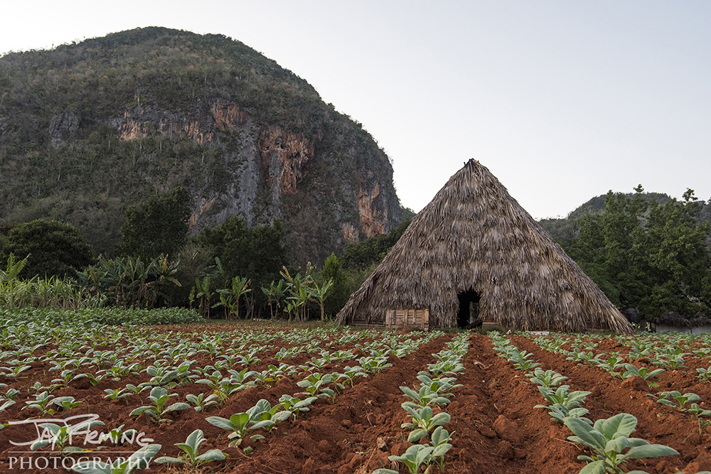 The Raul Reyes plantation just outside of the tourist center of Vinales. The farm is at the base of the magote mountain formation - attracting climbers from around the world.