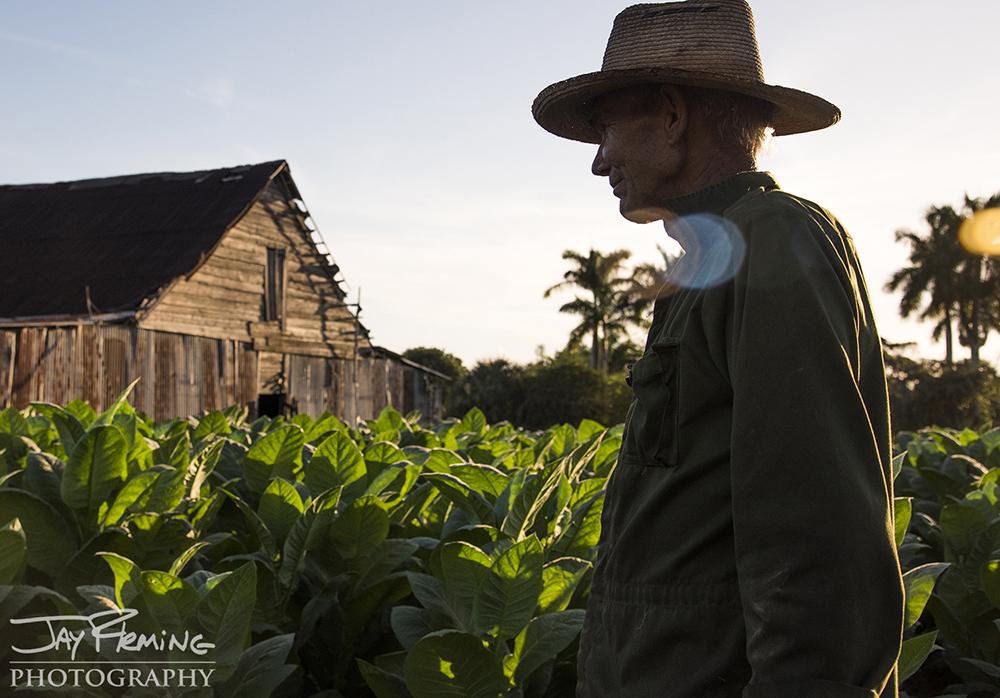 Juan Jose, a Pinar del Rio farmer, walks from the field towards his tobacco barn at sunset. Pinar del Rio.