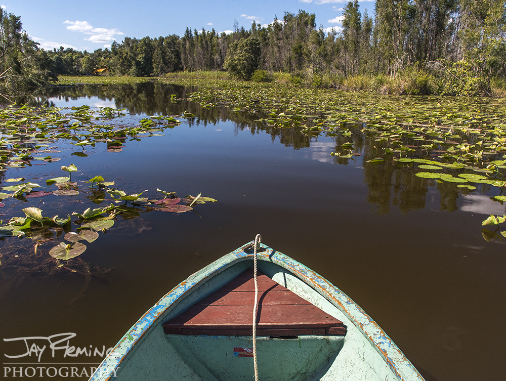 Paddling through the creeks that feed Laguna del Tesoro