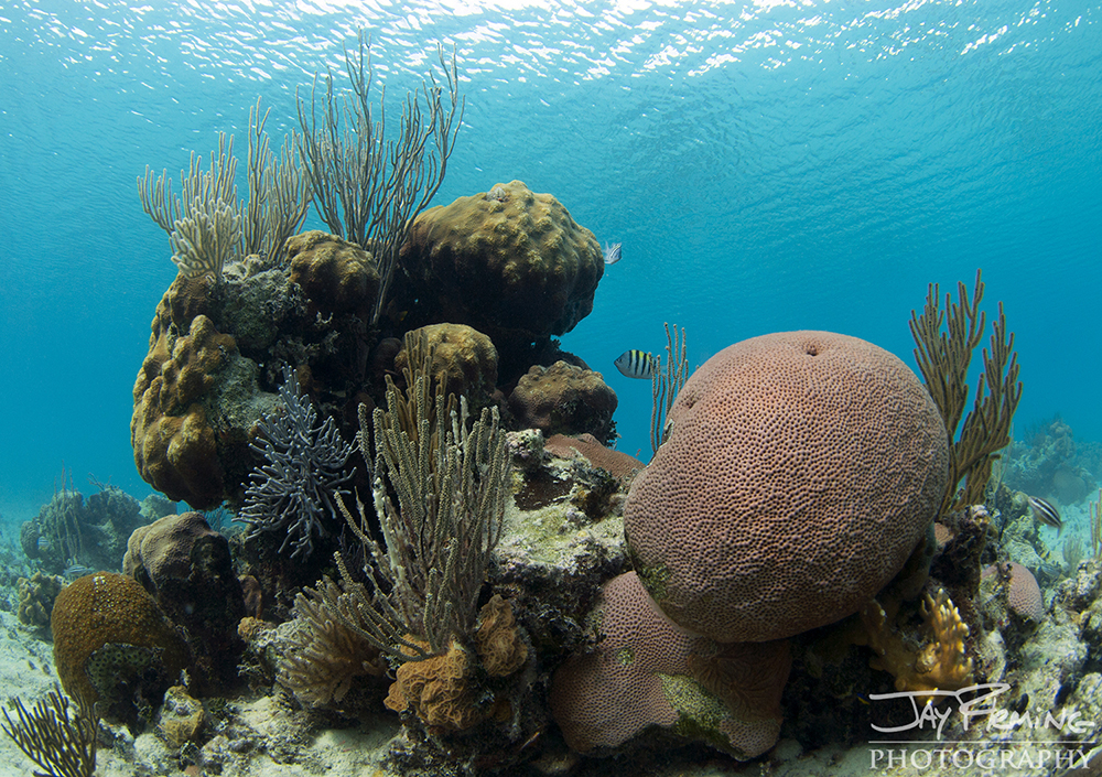 Coral heads that are relatively untouched by humans line the shoreline of the Bay of Pigs - which is one of the premier diving destinations in Cuba.