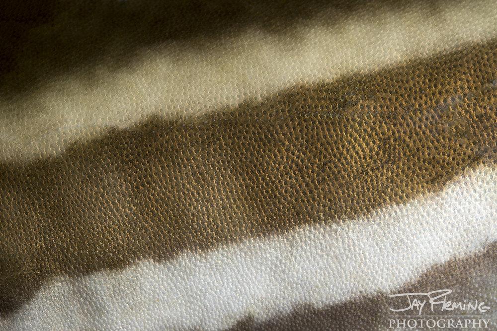 Tangier Sound Fish Details - © Jay Fleming - 02.jpg
