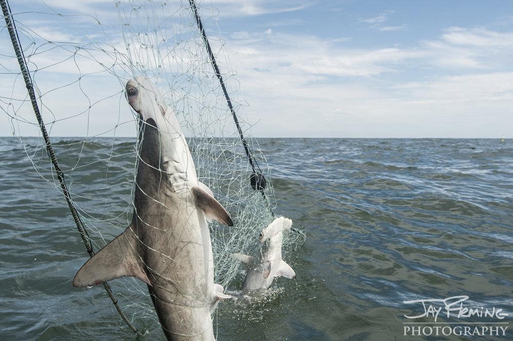 Fisheries © Jay Fleming08.jpg