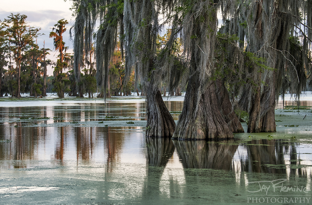 Louisiana  © Jay Fleming 11.jpg