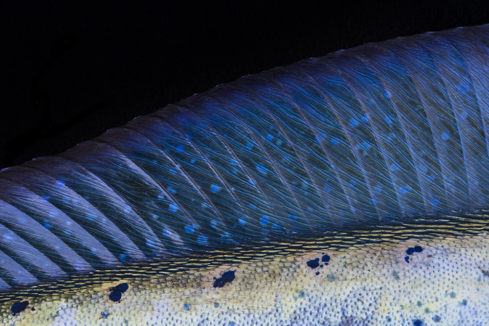Fish Details © Jay Fleming 02.jpg