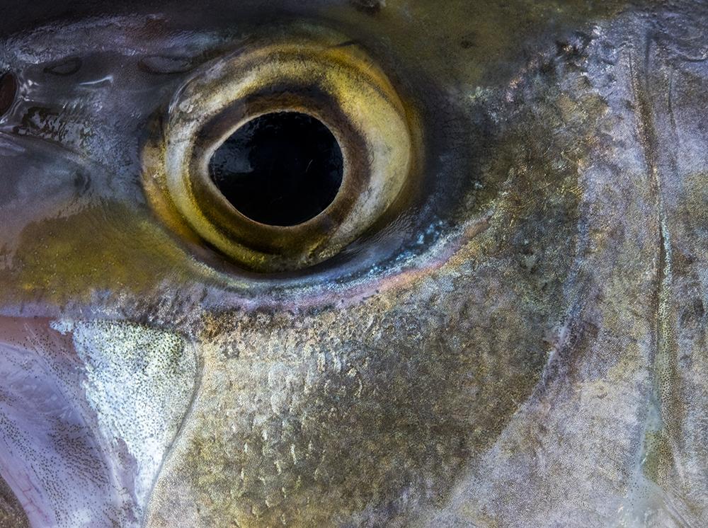 Fish Details © Jay Fleming 05.jpg