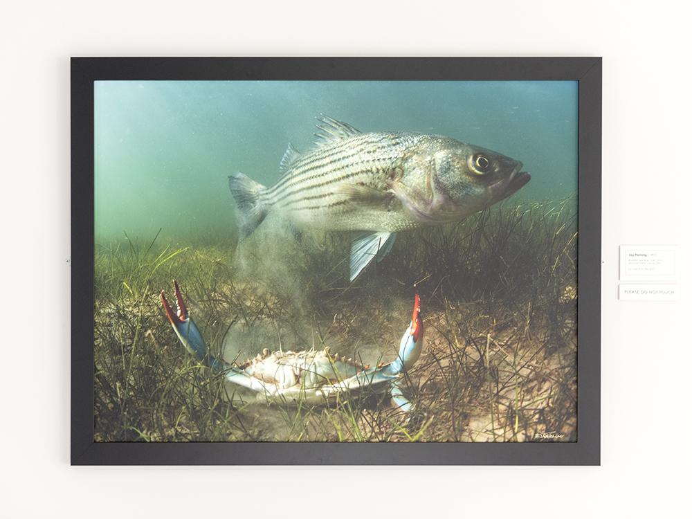 AAM Exhibit Island Life © Jay Fleming 05.jpg