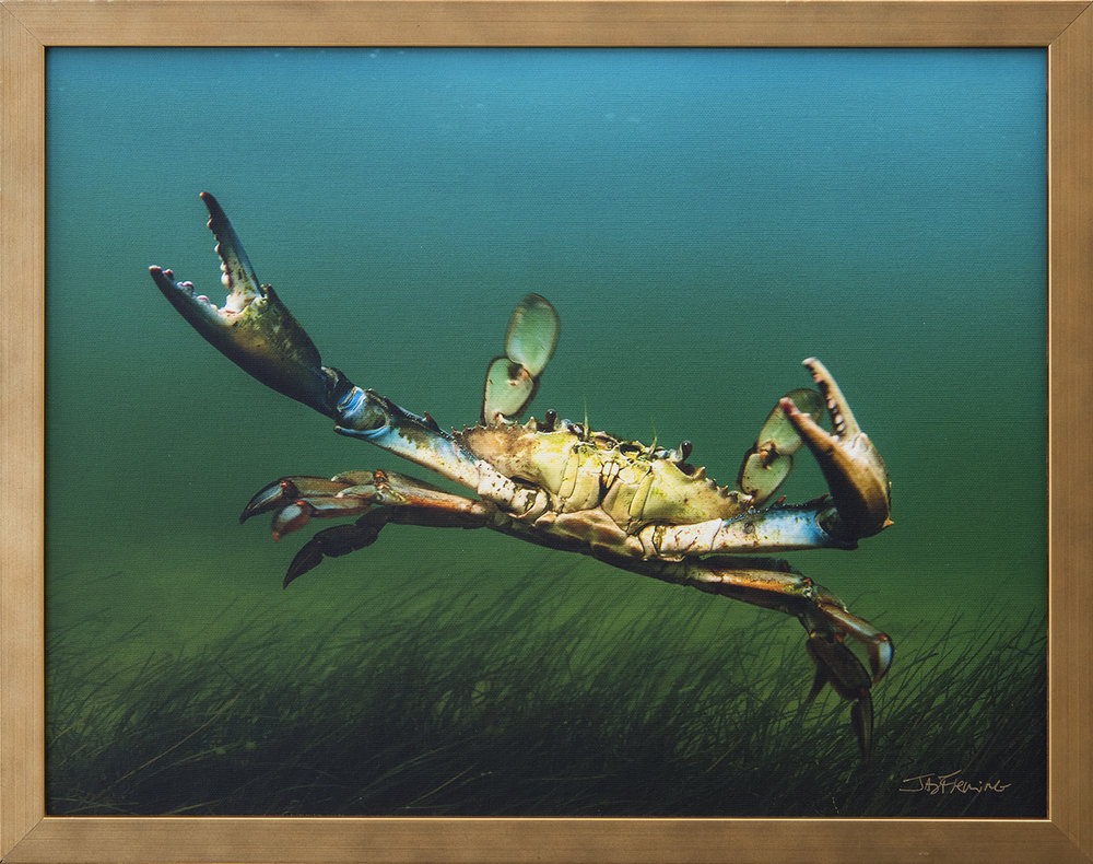 Custom Framed Canvas Print- © Jay Fleming11.jpg