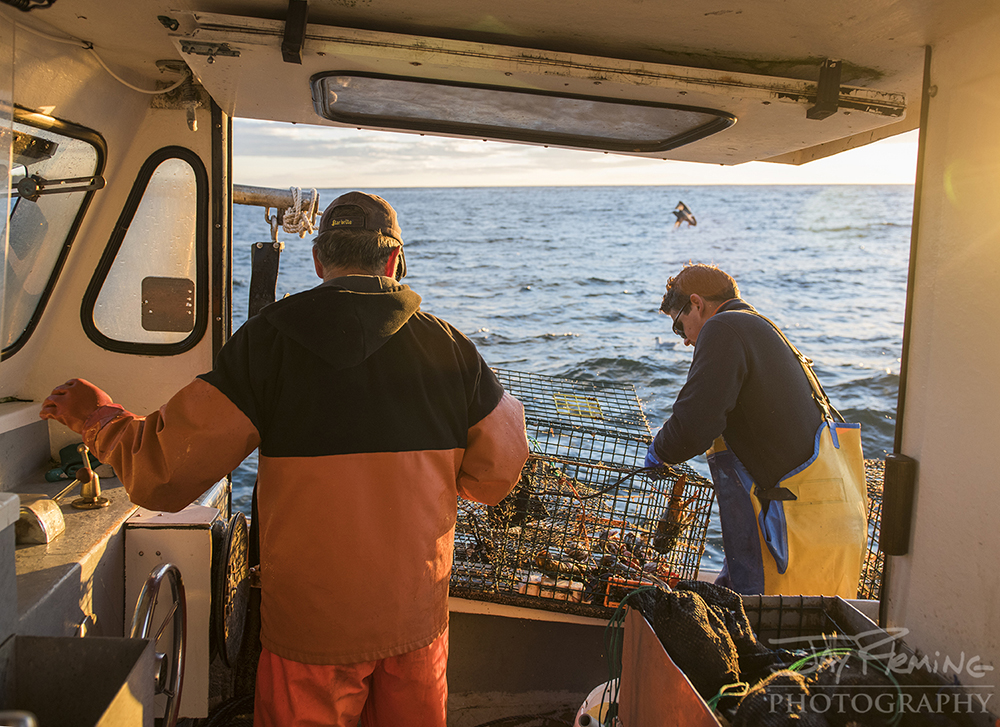 Cranberry Isles Fisherman's Co-Op fisherman, David Thomas and his crew hauling traps at first light.