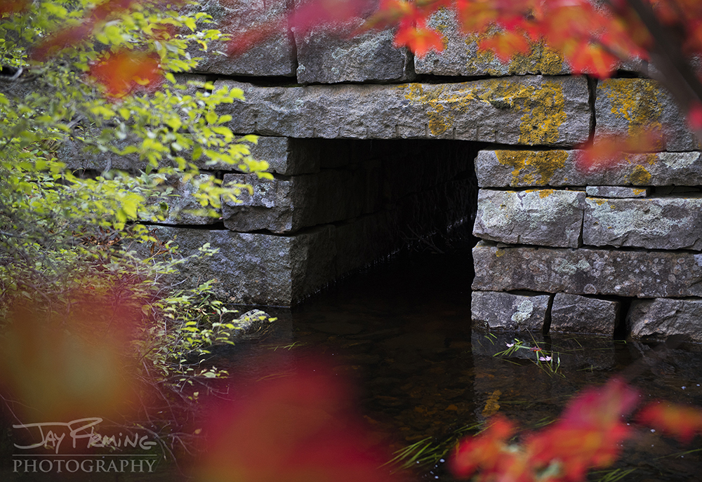 Fall colors in and around Acadia National Park.