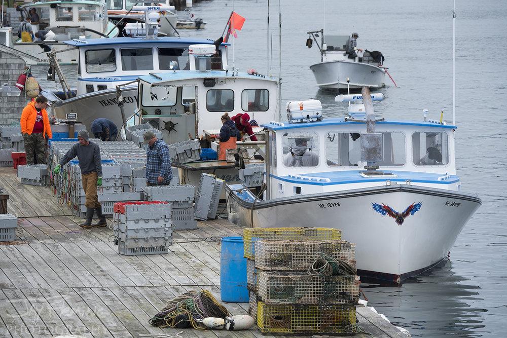 Workboats unloading lobster at Linda Bean's lobster dock on Carver's Harbor.
