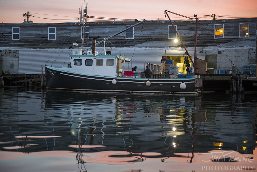 A workboat unloading lobsters at a seafood wholesaler on one of Portland's commercial piers on the Fore River.