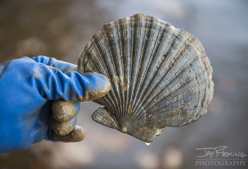 Chesapeake Bay Fossil © Jay Fleming03.jpg