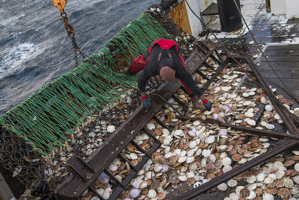 Scallop Industry © Jay Fleming - 22.jpg