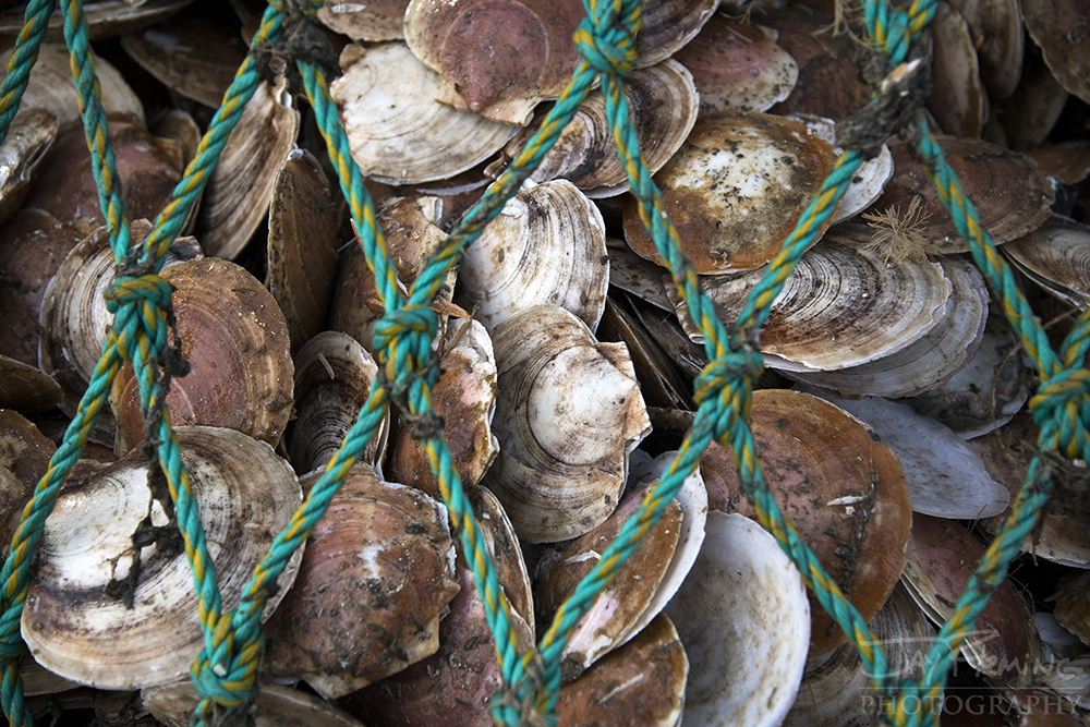 Scallop Industry © Jay Fleming - 15.jpg