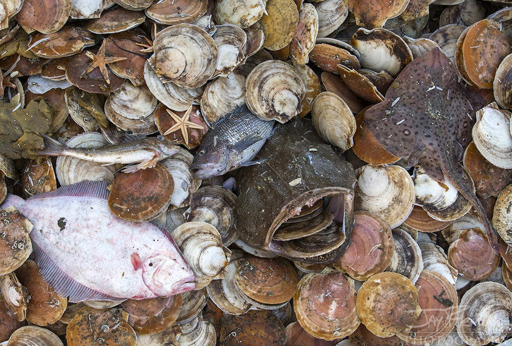 Scallop Industry © Jay Fleming - 46.jpg