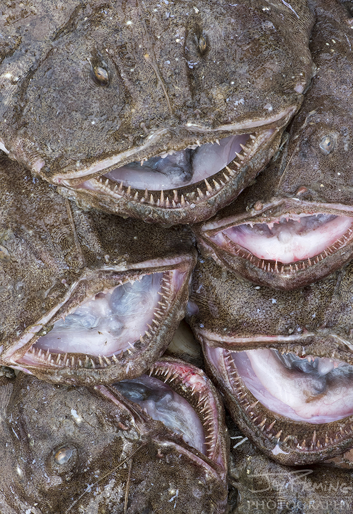 Scallop Industry © Jay Fleming - 04.jpg