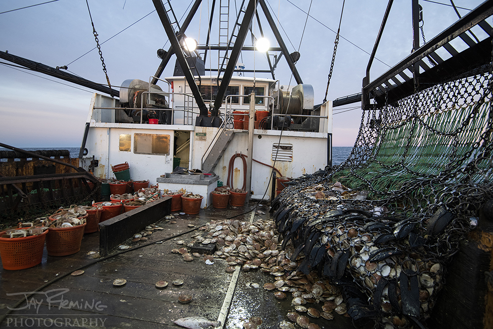 Scallop Industry © Jay Fleming - 36.jpg