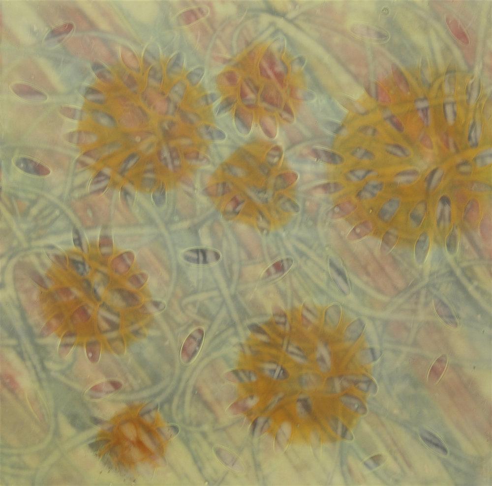 K. Hartung,  Entanglements 10 , encaustic and mixed media, 12x12, $600