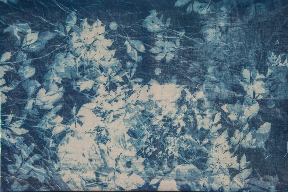 Marie Craig,  Thicket,  cyanotype on linen, stretched over canvas, 24x36