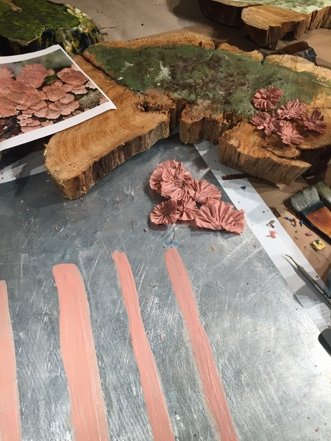 Pink Scalloped Lichen in Process