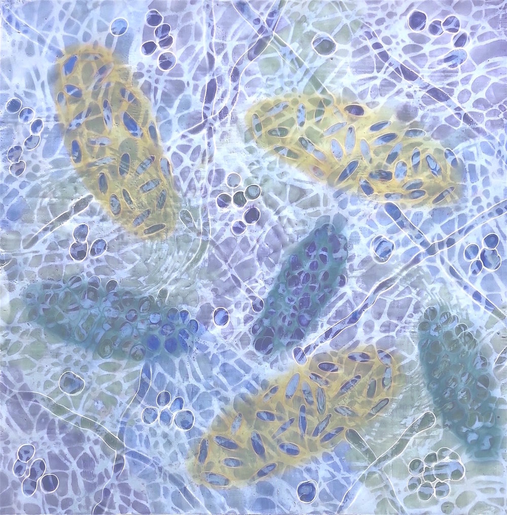 "Bio Patterns 7 , encaustic and pastel, 20"" x 20"""