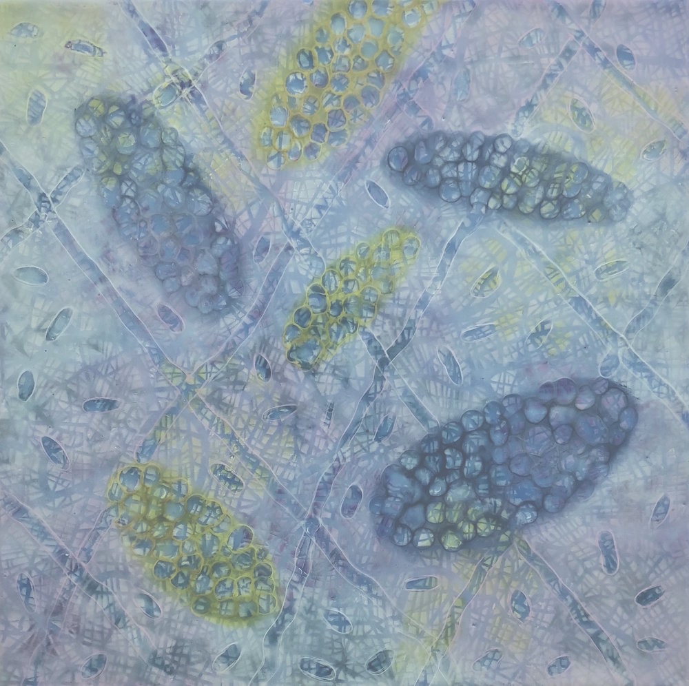 "Bio Patterns 8 , encaustic and pastel, 20"" x 20"""