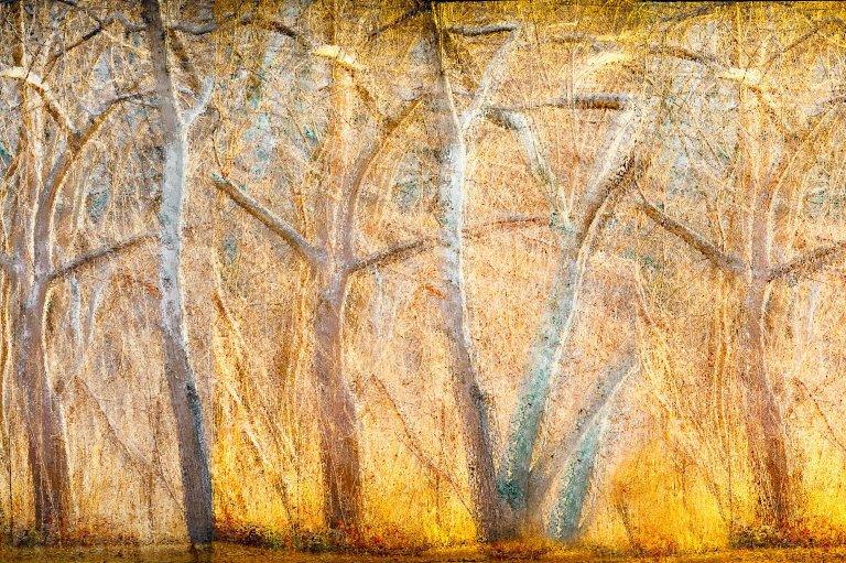 """""""Shimmering Light"""" by Linda DeStefano Brown"""