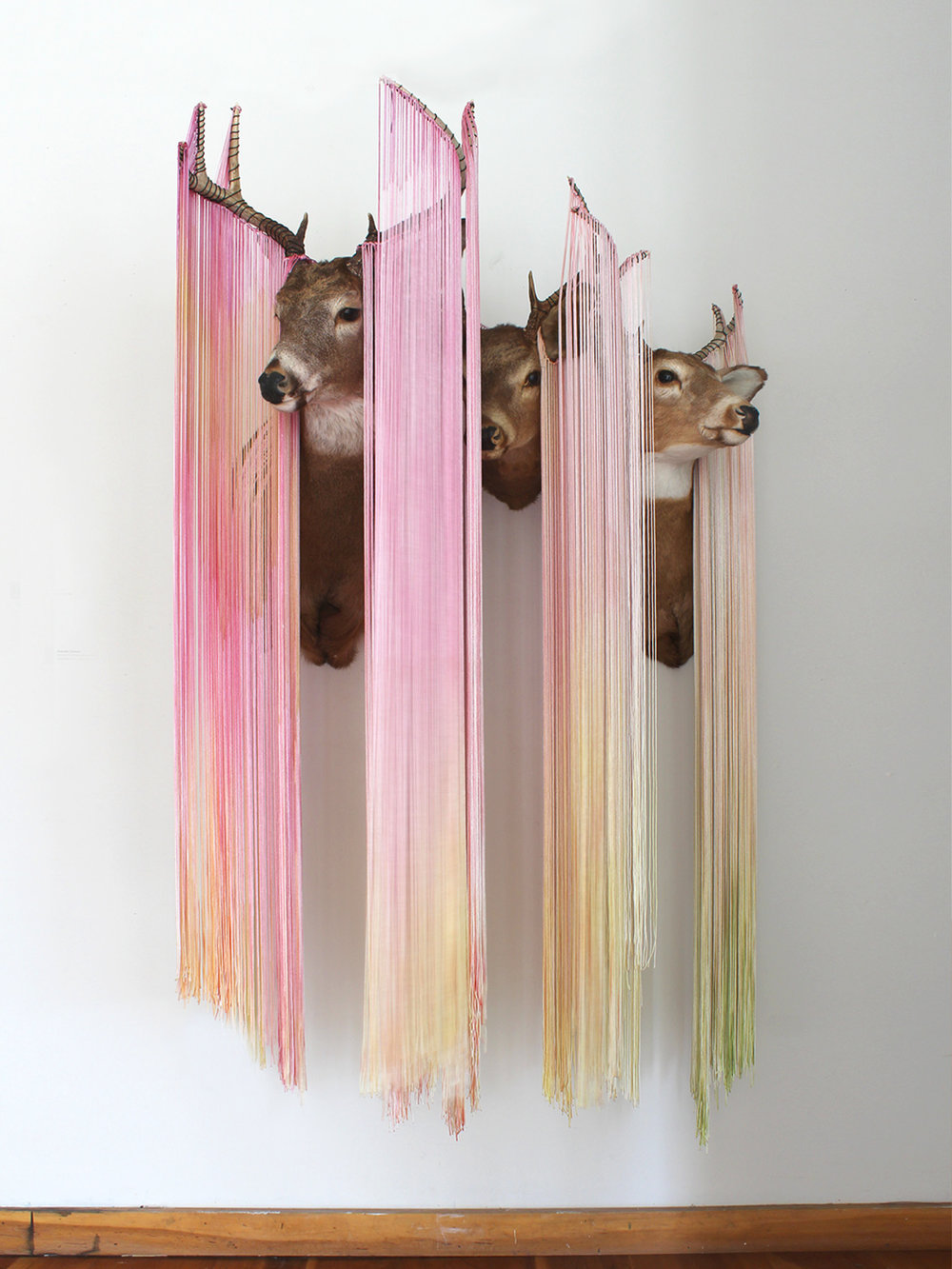 "Band in Light Red Vails (installation view) , taxidermy and nylon, 48"" x 26"" x 60"""