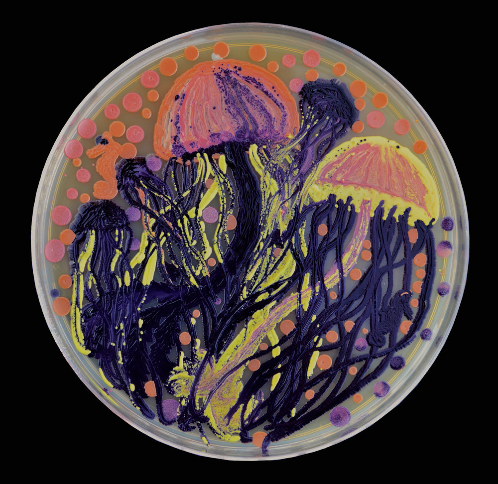 Penil Cobo,  Seascape Study , Microbes in agar