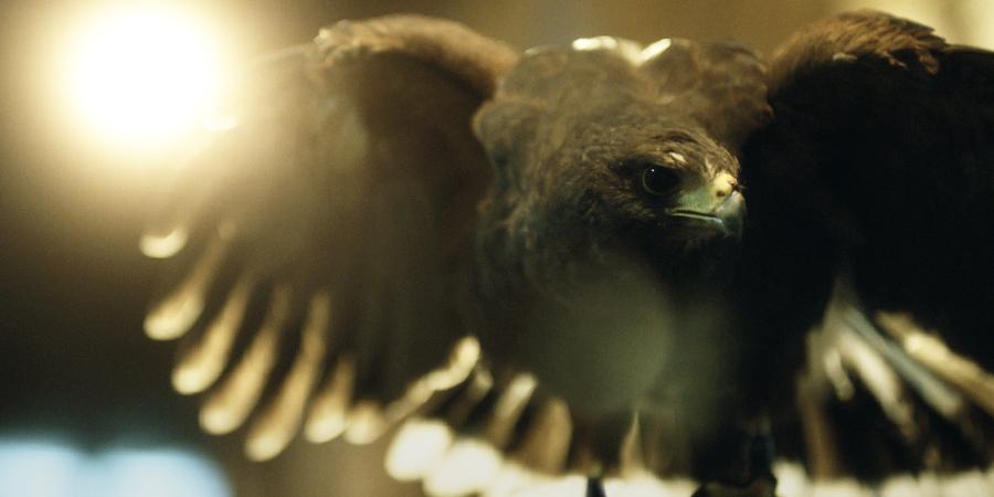 AEO| An American Eagle in London