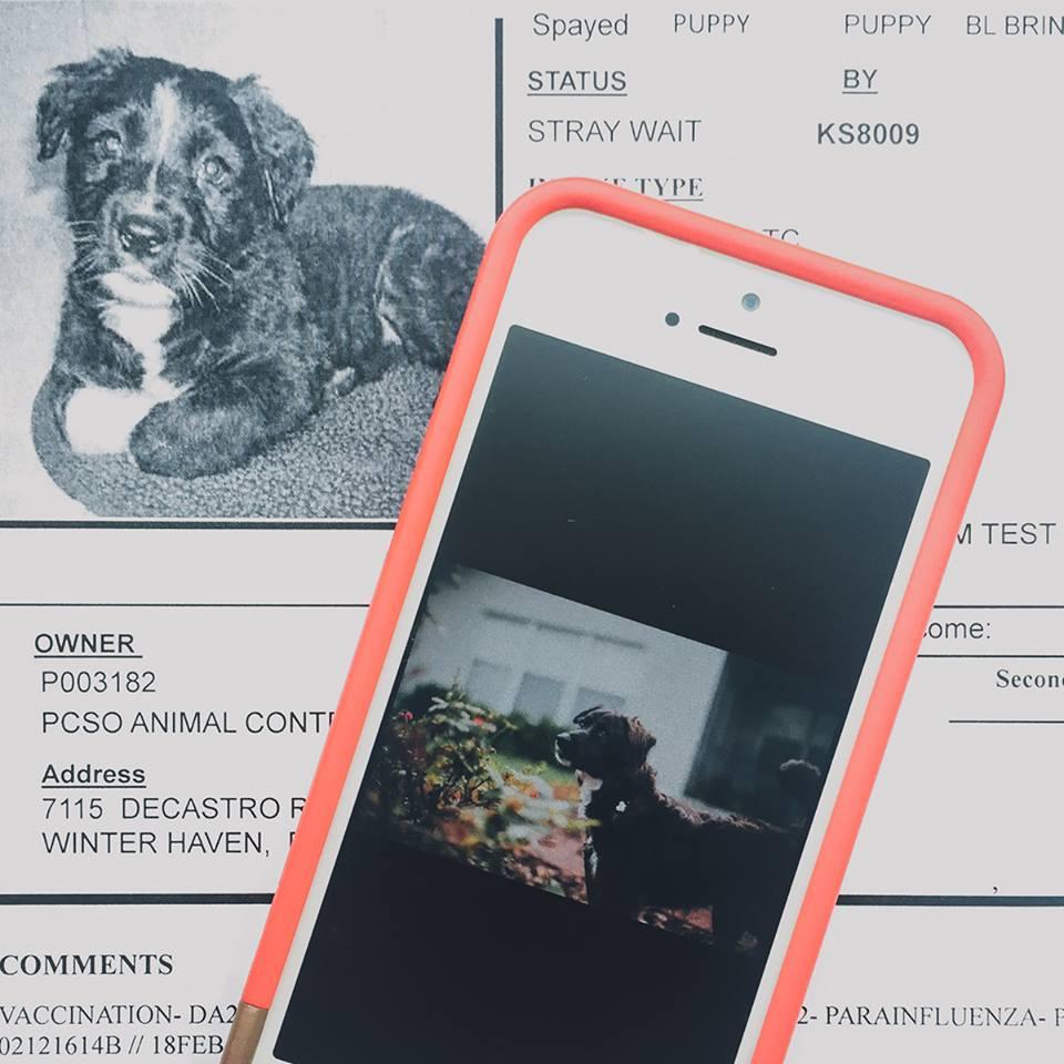 This Jenn Girl - Sadie - National Pet Day 2