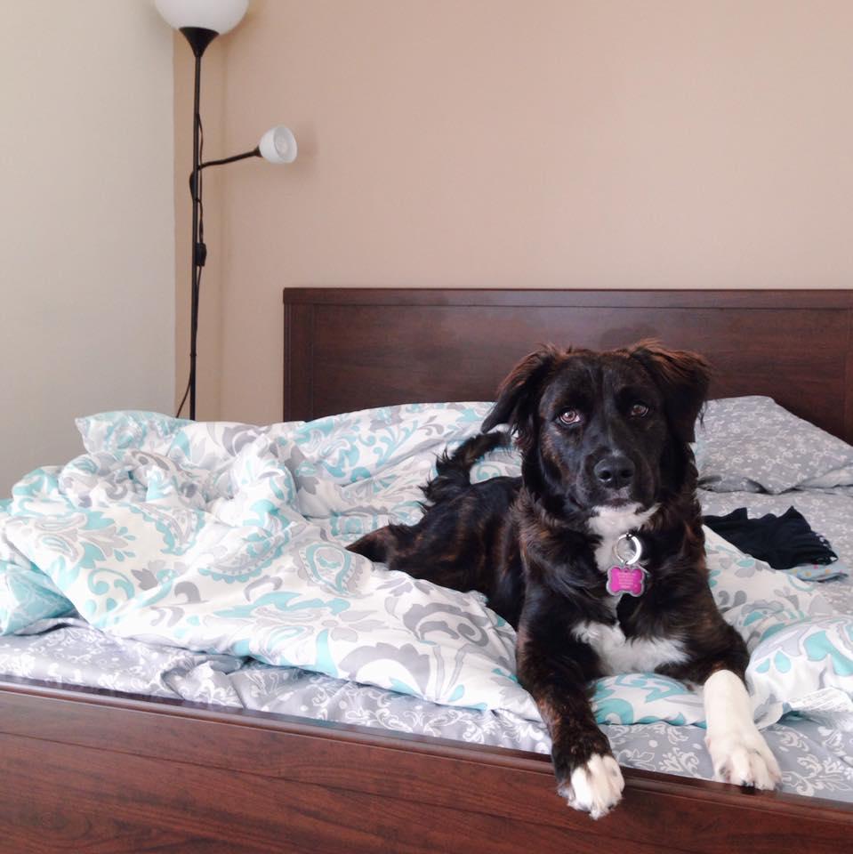 This Jenn Girl - Sadie - National Pet Day 3