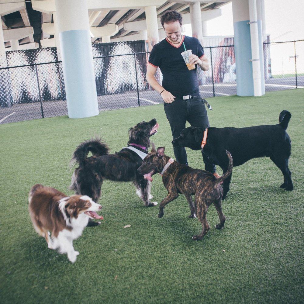 This Jenn Girl - Tampa Blogger - Loving Lately - Deputy Kotfila Memorial Dog Park