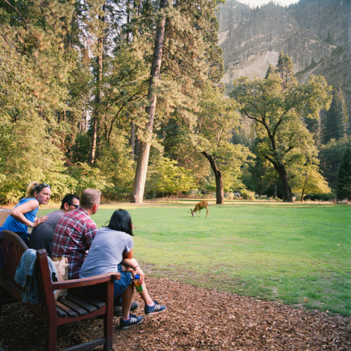 Grazing Buck, Yosemite National Park, CA