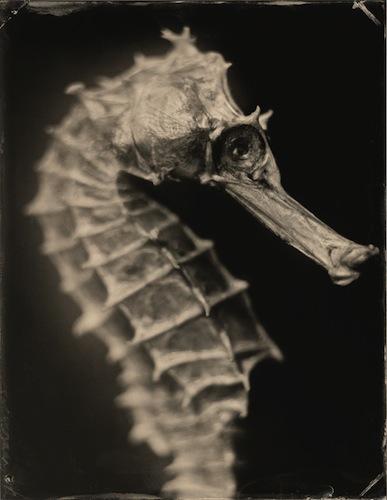 Hippocampus-1.jpg