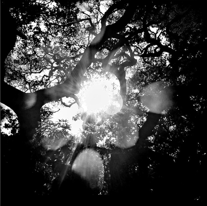 """Eclipse Light, 2012"" by Rachael Short (http://www.rachaelshort.com)"