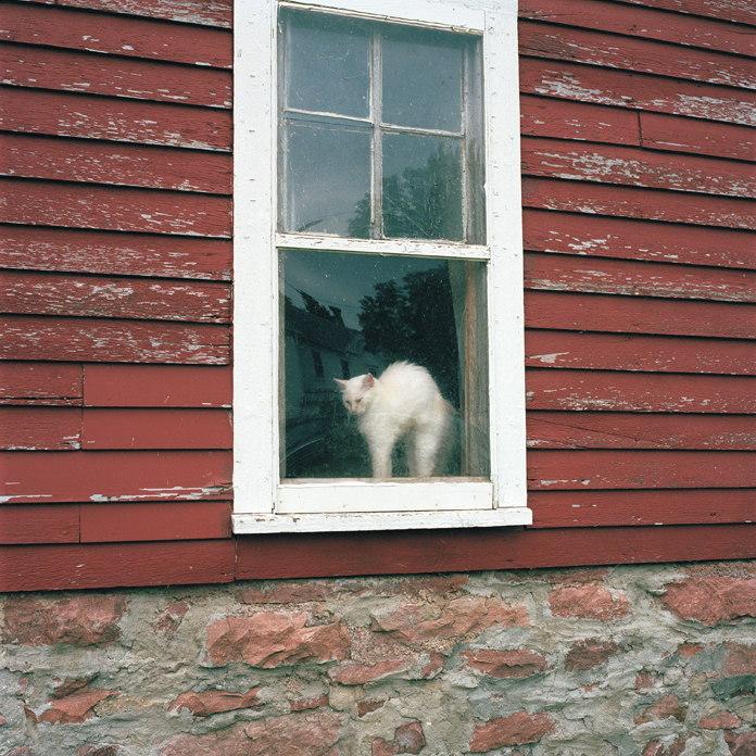 Farm Cat, South Dakota, 2010
