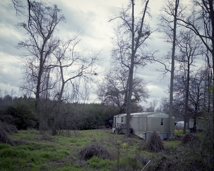 Vines and Trailer by Sarah Kobos