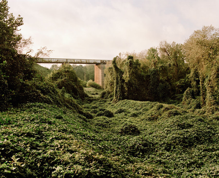 Kudzu. Lyman, SC, 2011 by Sean Litchfield