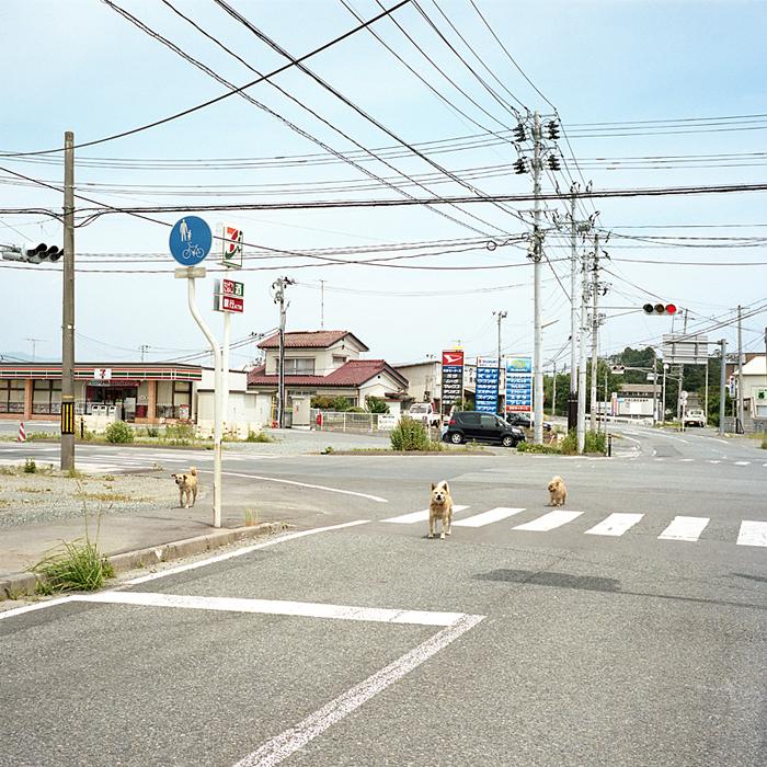 Abandoned Dogs by Toshiya Watanabe