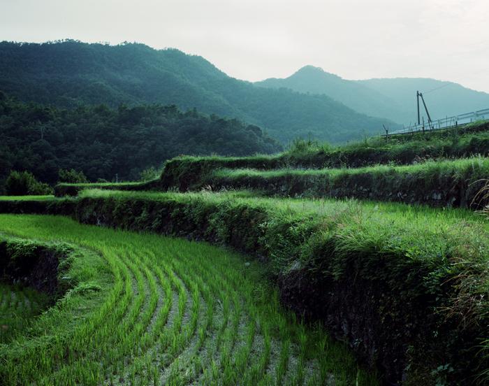 Shenal21_shodoshima6.jpg