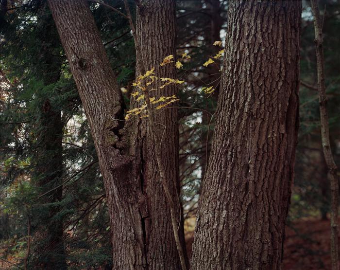 Black Oak, 2011