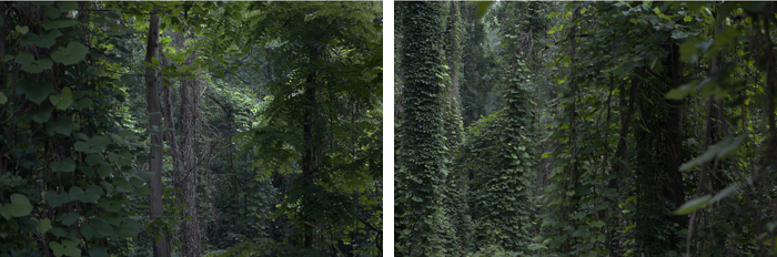 The Tree Alone, Kudzu (Part II and III)