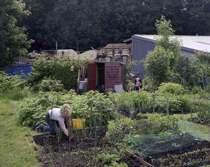 Lynmouth Road Allotments, Bristol, June 2008