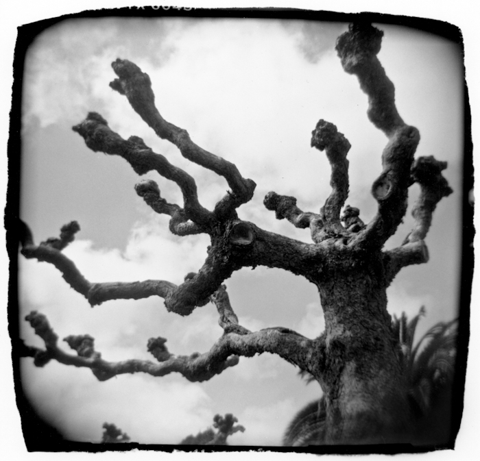 Knobby Tree, San Francisco
