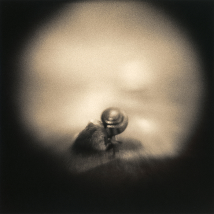 Snail on Rock, 2010