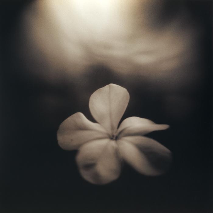 Plumbego, 2006